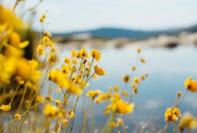 Retiros - Flor do Sol